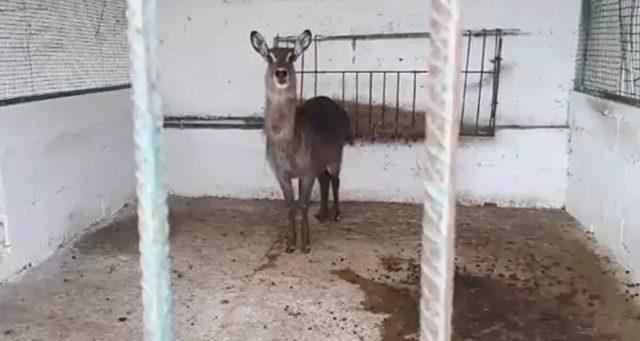 la-liberazione-degli-animali-nello-zoo-in-Albania 1