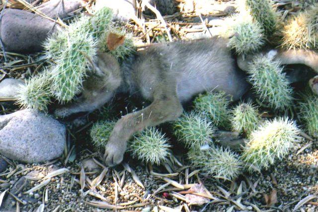 il-salvataggio-del-cucciolo-che-in-realtà-non-era-un-cane