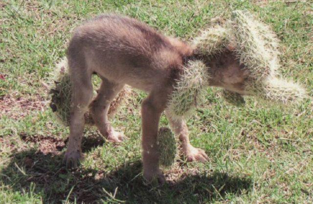 il-salvataggio-del-cucciolo-che-in-realtà-non-era-un-cane 2