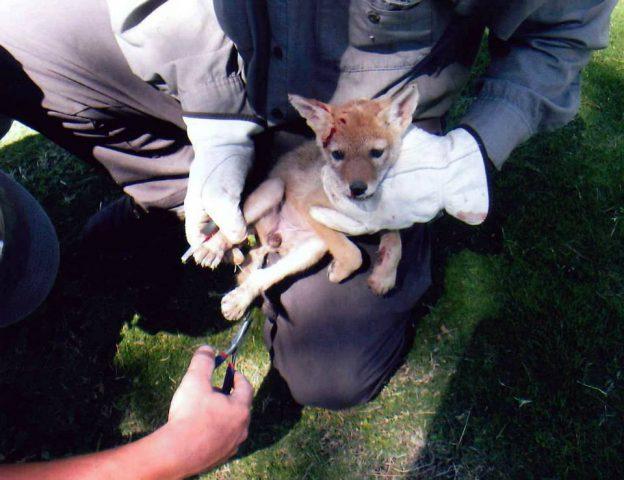 il-salvataggio-del-cucciolo-che-in-realtà-non-era-un-cane 4