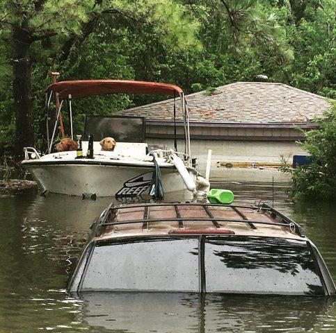 i-cani-abbandonati-durante-l'uragano-Harvey