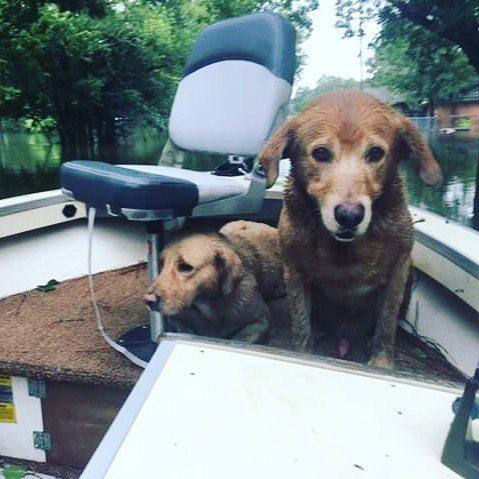 i-cani-abbandonati-durante-l'uragano-Harvey 1