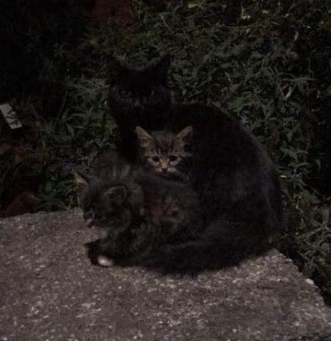 2-piccoli-gattini