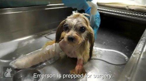 il-triste-passato-di-Emerson 1