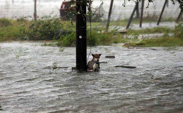 i-cani-abbandonati-durante-l'uragano-Harvey 2