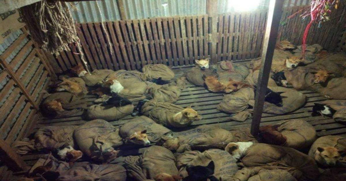 il-salvataggio-dei-36-cani-che-stavano-per-essere-portati-in-un-macello