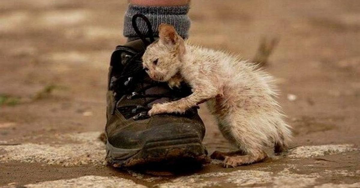 La storia dietro la foto del gatto accanto alla scarpa