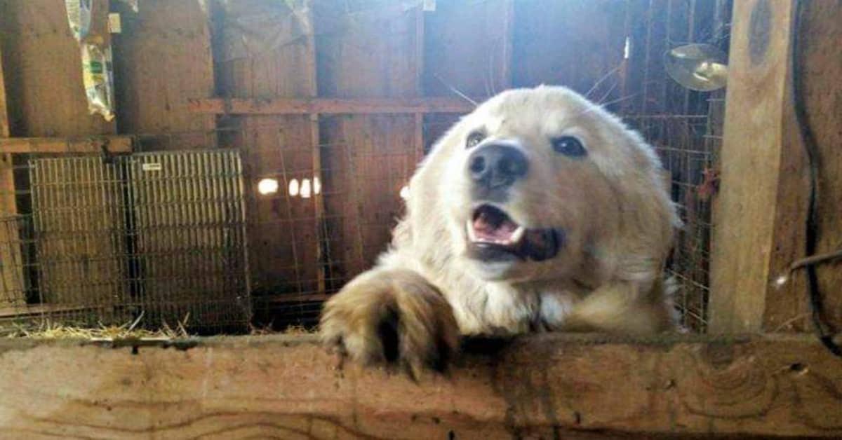 la-sentenza-del-giudice-sulla-denuncia-dei-vicini-sui-cani-che-abbaiano