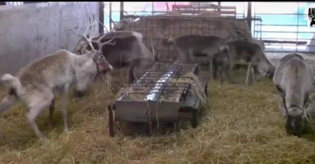 i-maltrattamenti-sugli-animali-ai-mercatini-di-Natale 1