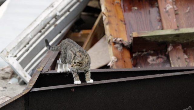 i-cani-abbandonati-durante-l'uragano-Harvey 4