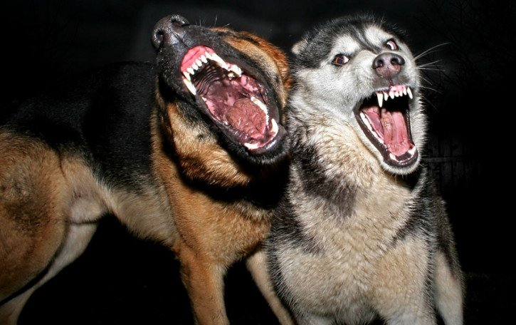 Cosa-fare-se-un-cane-ci-attacca