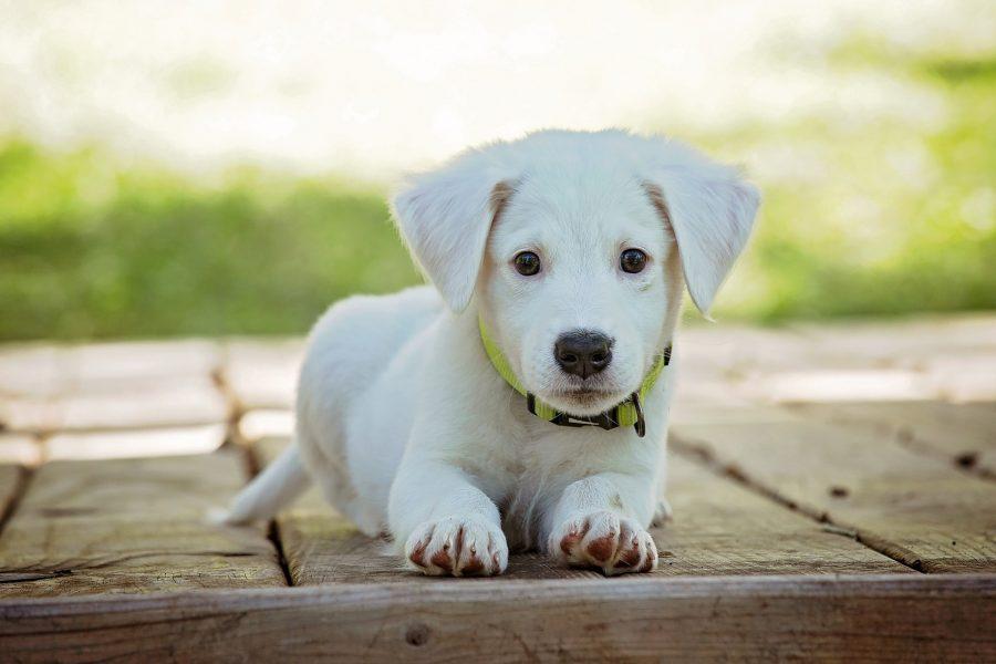 Nomi per cani maschi e femmine