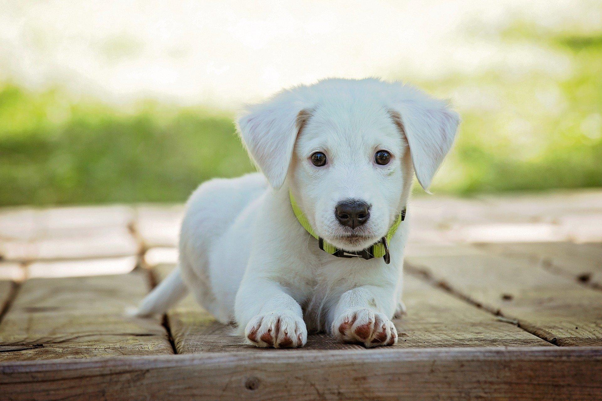 Nomi Per Cani Maschi E Femmine Bigodino