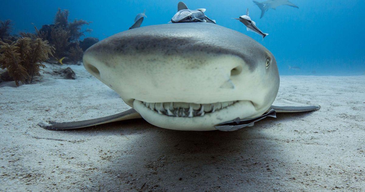 Adolescente attaccato da 12 squali: è in gravi condizioni