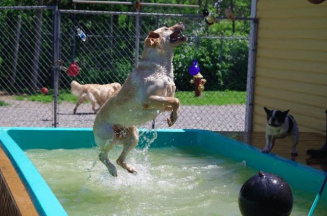 l'asilo-per-i-cani 1