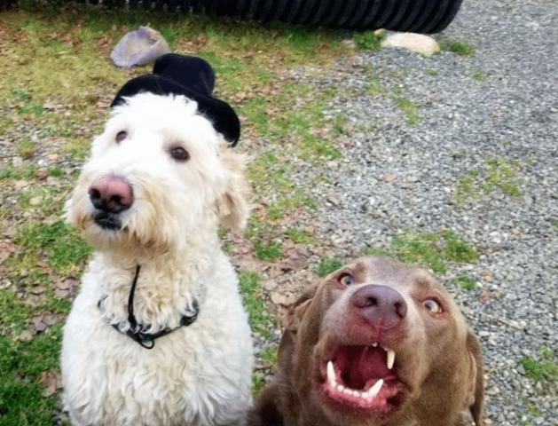 l'asilo-per-i-cani 3