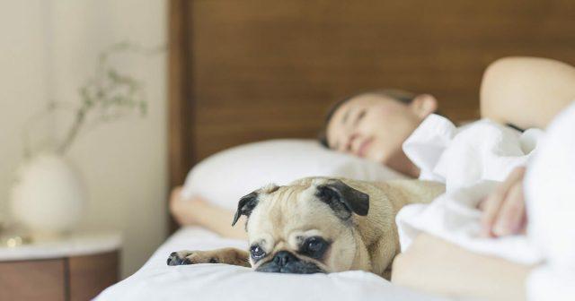 8-ragioni-per-dormire-con-il-proprio-cane 2