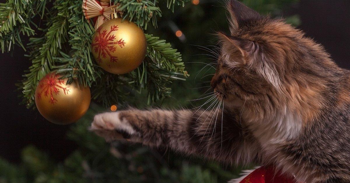 5 regole per realizzare l'Albero di Natale perfetto