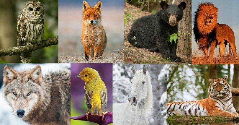 animali preferiti