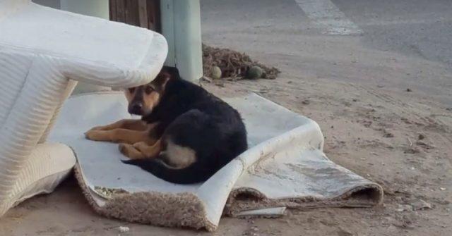cane-abbandonato-aspetta-il-ritorno-dei-proprietari