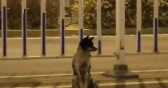 cane-fedele-aspetta-il-suo-umano