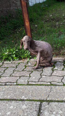 cane-lunamatrona
