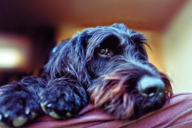 cane-spaventato
