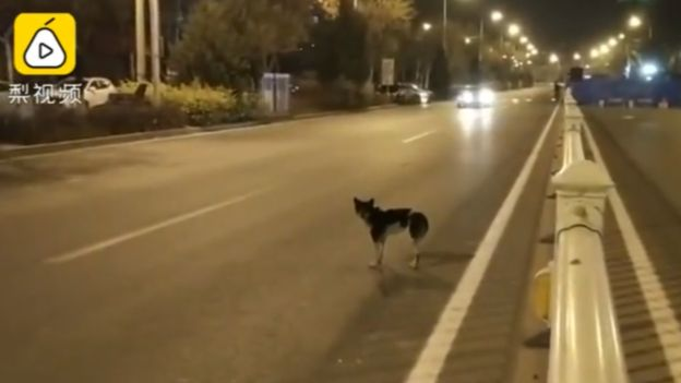 cane-strada