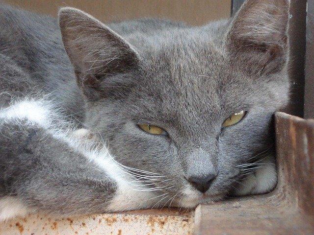 malattie-della-pelle-dei-gatti