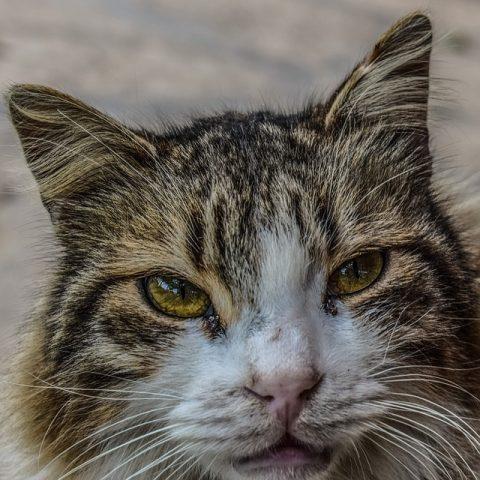 Malattie Della Pelle Dei Gatti Quali Sono E Come Curarle Bigodino