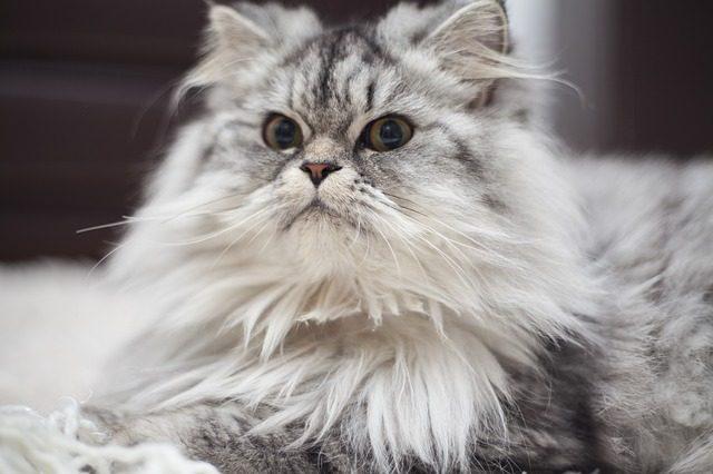 malattie-del-gatto-anziano