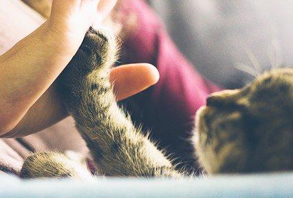 perché-i-gatti-fanno-la-pasta