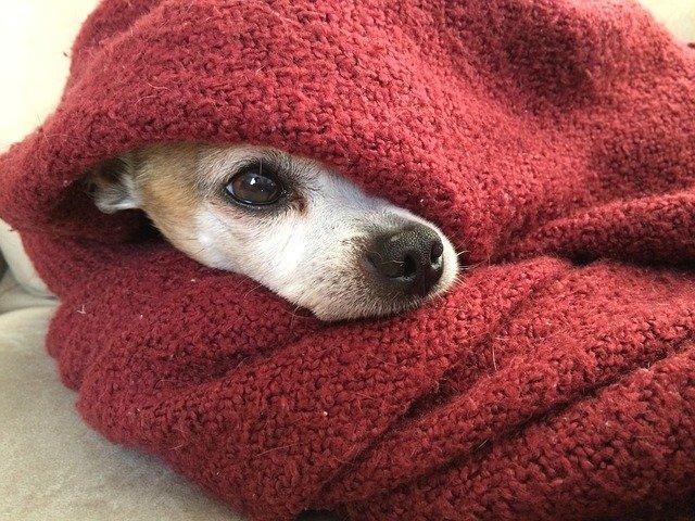 cane-in-inverno