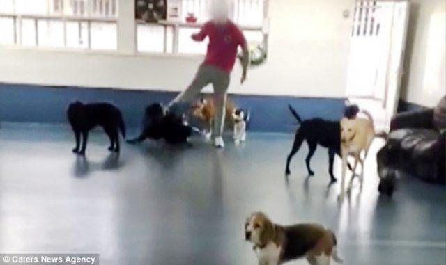 comportamento-dogsitter