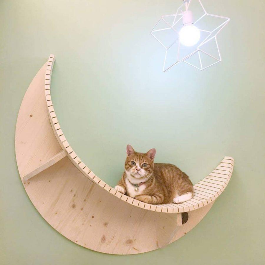 cuccia-gatti-luna