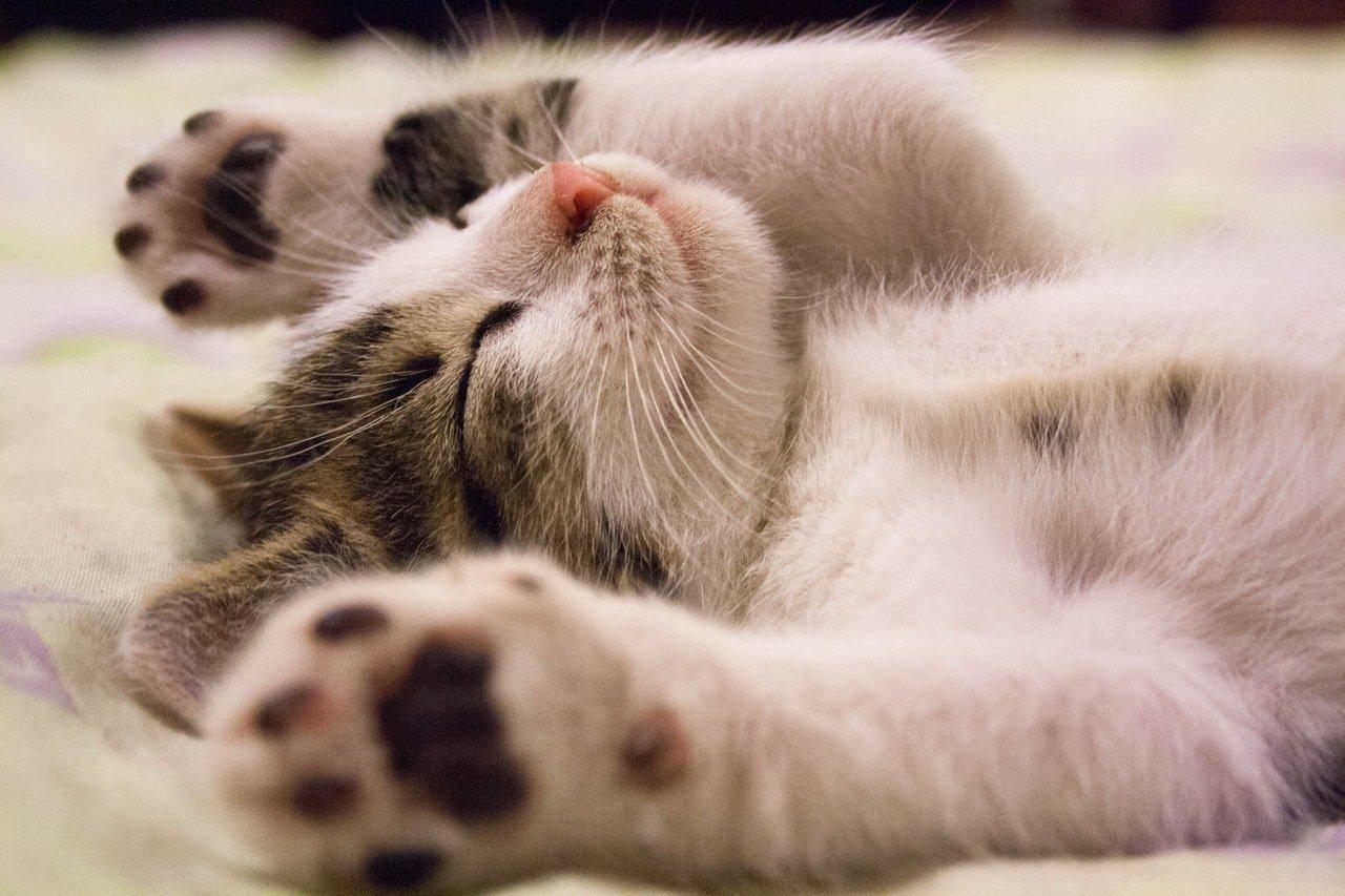 cuccia-per-gatti