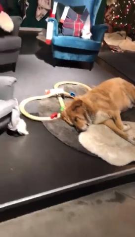 cucciolo-ikea