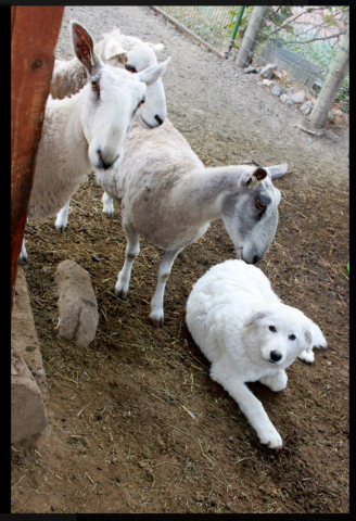 la-denuncia-dei-vicini-per-i-cani-che-abbaiano 2