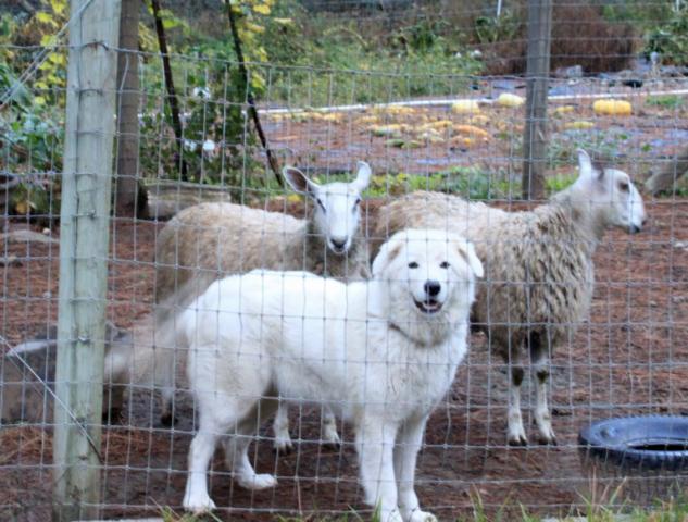 la-denuncia-dei-vicini-per-i-cani-che-abbaiano