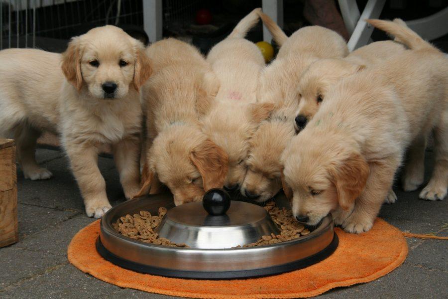 dieta per cani