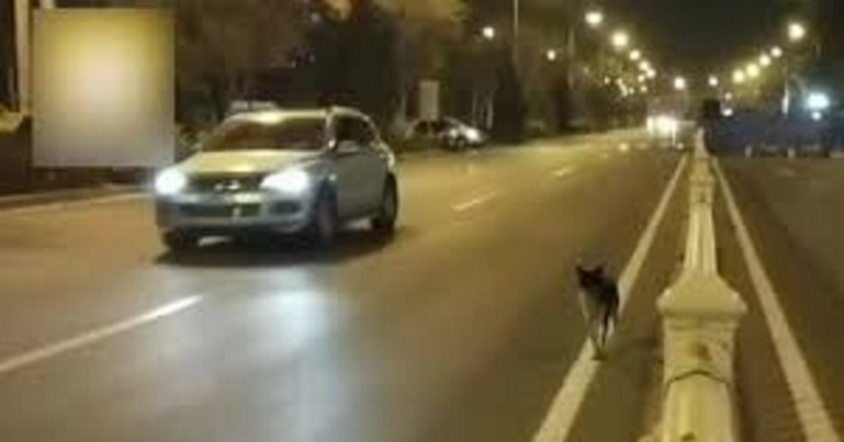 Cane fedele aspetta il suo umano