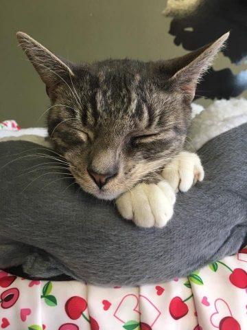 gattino-bellissimo