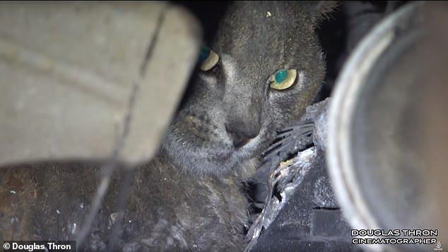 gatto salvato