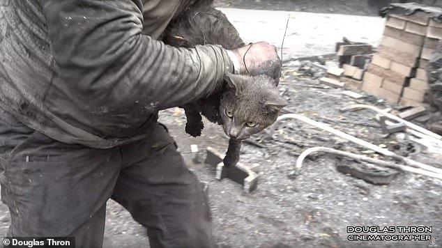 gatto salvatov