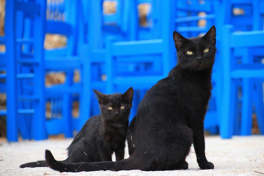 Giornata mondiale del gatto nero