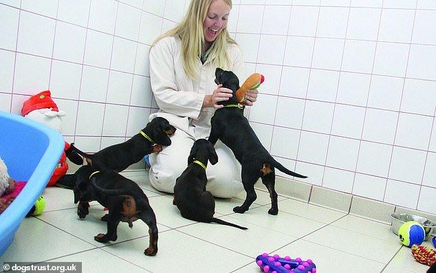 giocare con i cani