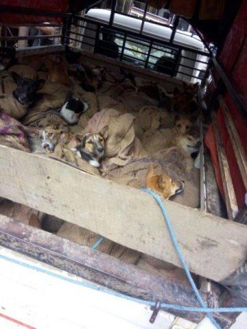 il-salvataggio-dei-36-cani 1
