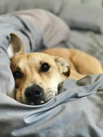 8-ragioni-per-dormire-con-il-proprio-cane 1