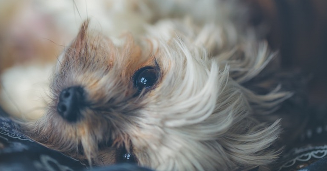 i-cani-possono-dimenticare-le-persone-che-amano