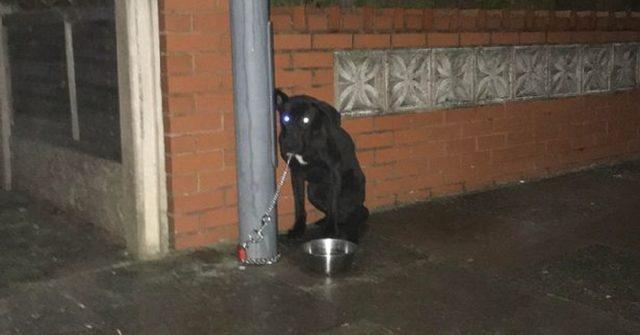il-cane-abbandonato-di-birmingham